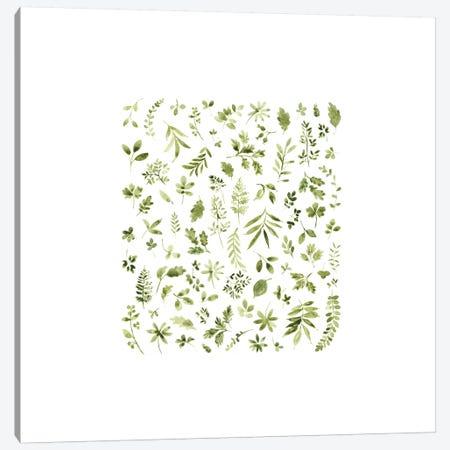Leaf Study No. 3 Canvas Print #SEL13} by Melissa Selmin Canvas Artwork