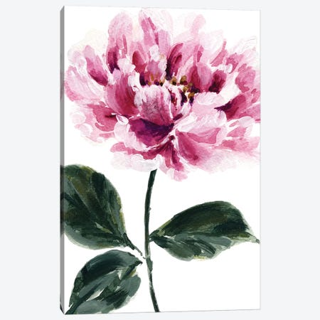 Peony No. 2 Canvas Print #SEL36} by Melissa Selmin Art Print