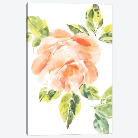 Rosa No. 3 Canvas Print #SEL46} by Melissa Selmin Canvas Art