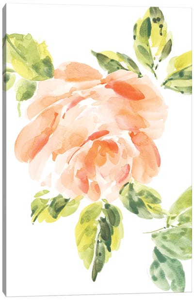 Rosa No. 3 Canvas Art Print