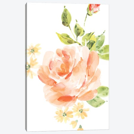 Rosa No. 5 Canvas Print #SEL48} by Melissa Selmin Art Print