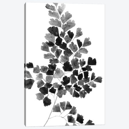 Black Fern Canvas Print #SEL56} by Melissa Selmin Art Print