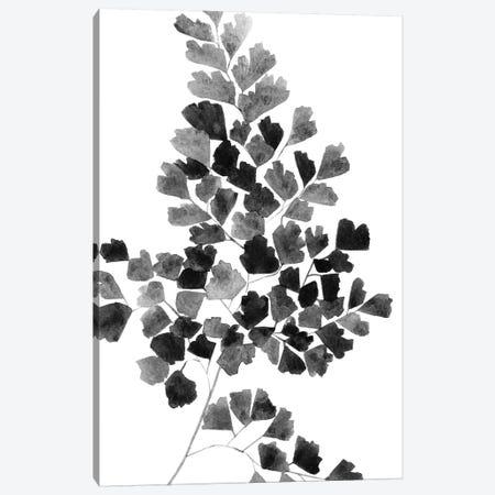 Black Fern Canvas Print #SEL56} by Melissa Selmin Art Print