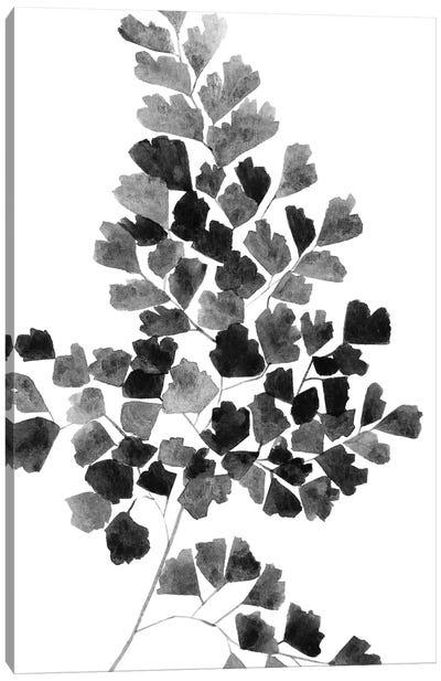 Black Fern Canvas Art Print