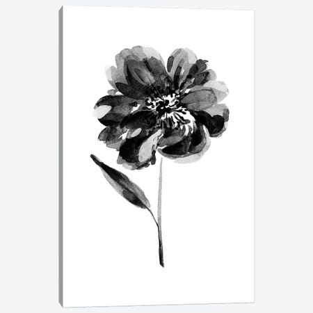 Black Peony Canvas Print #SEL57} by Melissa Selmin Canvas Print