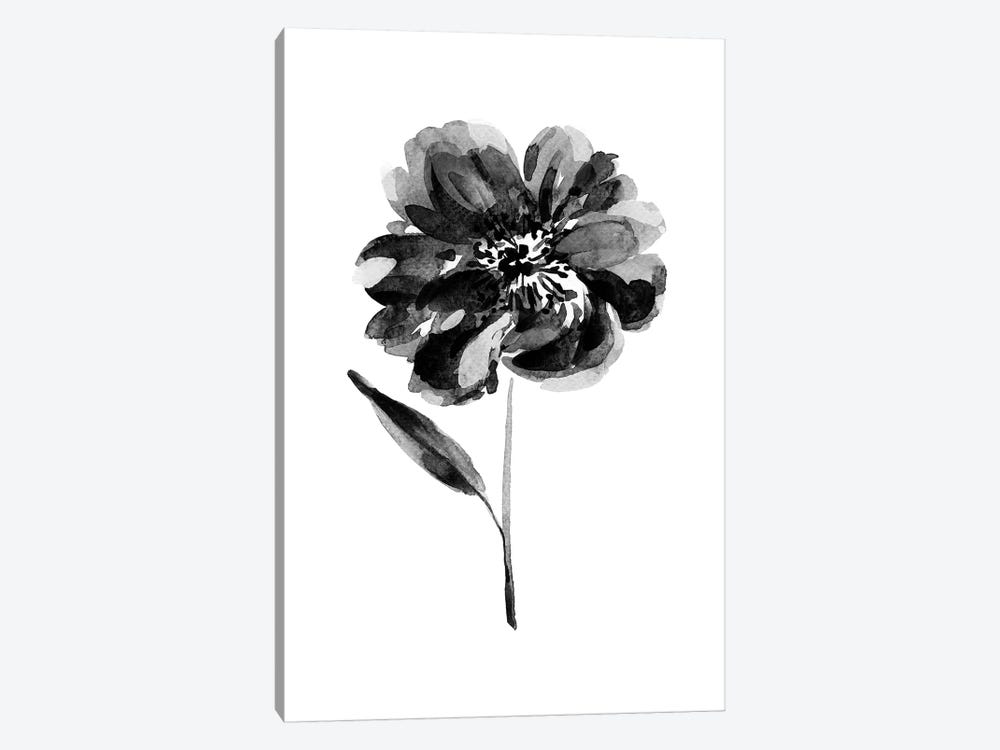 Black Peony by Melissa Selmin 1-piece Canvas Artwork