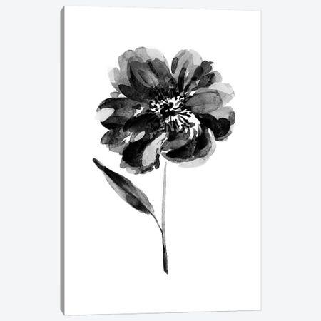 Black Peony Canvas Print #SEL57} by Melissa Selmin Canvas Print