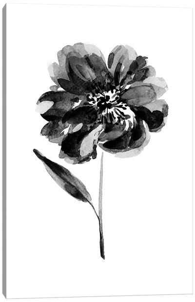 Black Peony Canvas Art Print