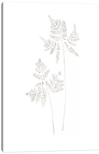 Delicate Fern Canvas Art Print