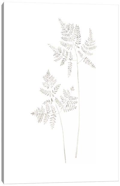 Delicate Fern Canvas Art Print