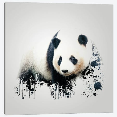 Panda Canvas Print #SFP23} by Sergio Feldmann Pearce Canvas Print