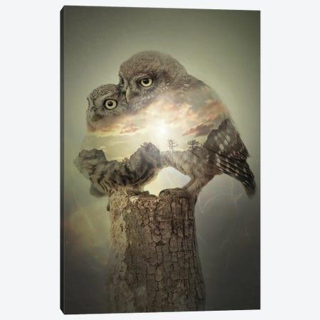 Owls Canvas Print #SFP47} by Sergio Feldmann Pearce Canvas Wall Art