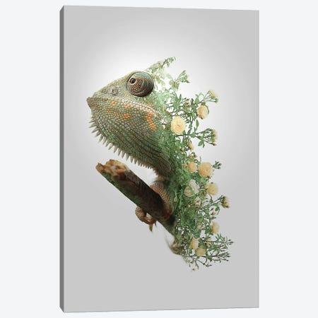 Chameleon Canvas Print #SFP8} by Sergio Feldmann Pearce Art Print
