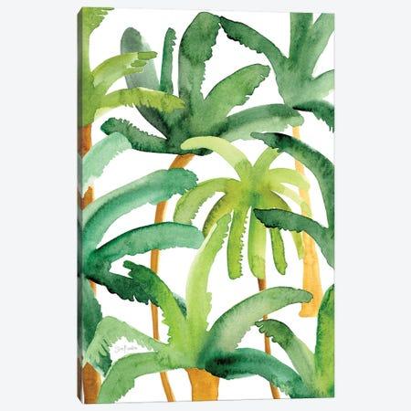 Palms Canvas Print #SFR213} by Sara Franklin Art Print