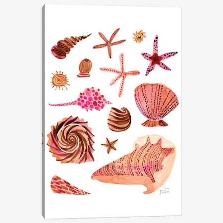 Seashells Canvas Print #SFR218} by Sara Franklin Art Print