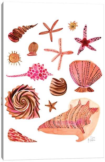 Seashells Canvas Art Print