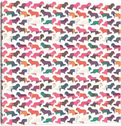 Coral Dachshunds Canvas Print #SFR41