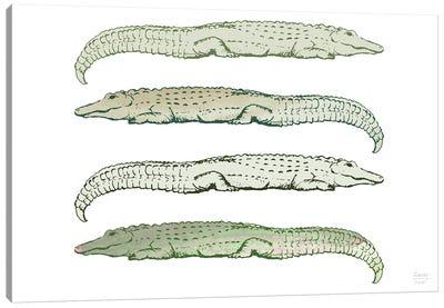 Lazy Alligators Canvas Art Print
