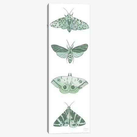 Four Moths Canvas Print #SGD94} by Statement Goods Canvas Art