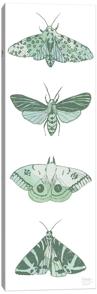 Four Moths Canvas Art Print