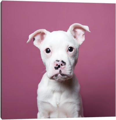 Tucker The Rescue Puppy Canvas Art Print
