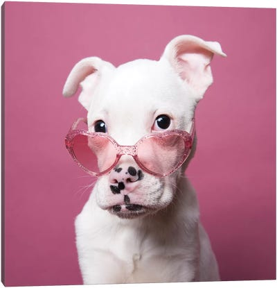 Tucker The Rescue Puppy, Sparkling Canvas Art Print