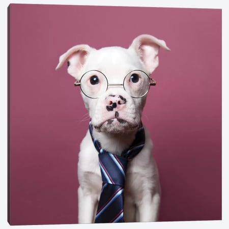 Tucker The Rescue Puppy, The Job Interview Canvas Print #SGM102} by Sophie Gamand Canvas Artwork
