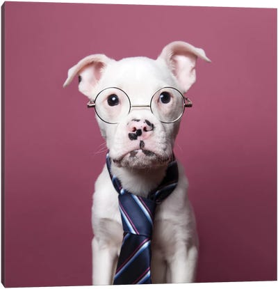 Tucker The Rescue Puppy, The Job Interview Canvas Art Print
