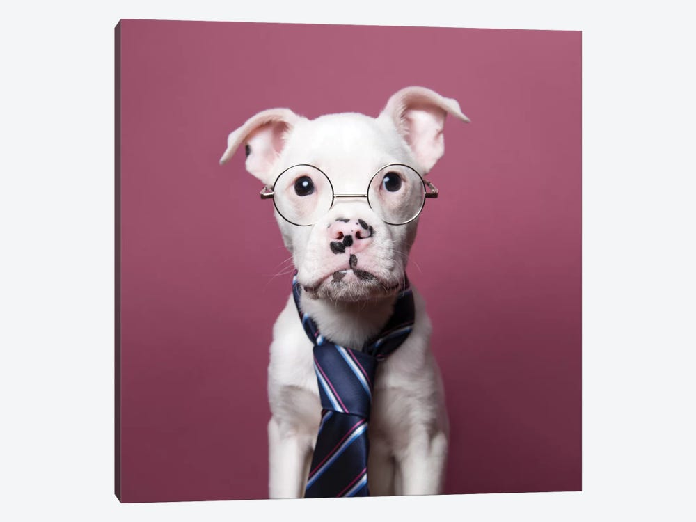 Tucker The Rescue Puppy, The Job Interview by Sophie Gamand 1-piece Canvas Artwork