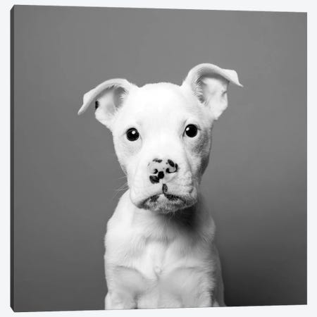 Tucker The Rescue Puppy, Black & White Canvas Print #SGM103} by Sophie Gamand Canvas Art