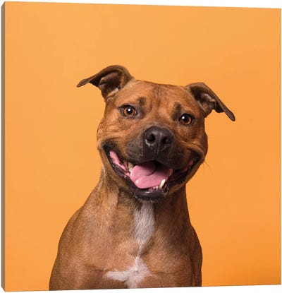 Velcro The Rescue Dog Canvas Art Print