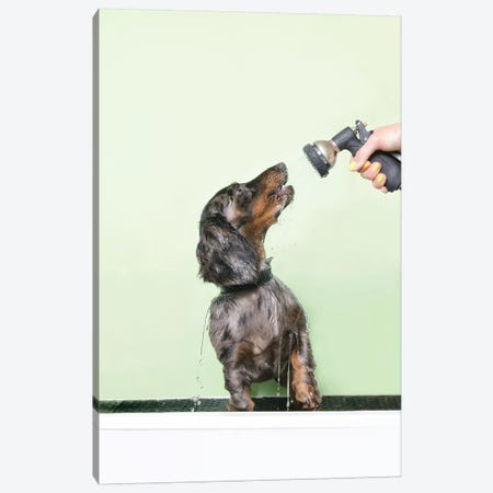 Wet Dog, Anthony 3-Piece Canvas #SGM106} by Sophie Gamand Canvas Print
