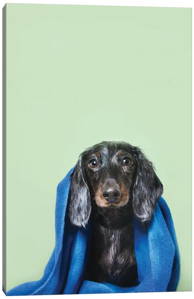 Wet Dog, Anthony With Towel Canvas Art Print