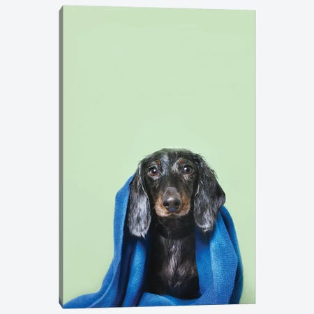 Wet Dog, Anthony With Towel 3-Piece Canvas #SGM107} by Sophie Gamand Art Print