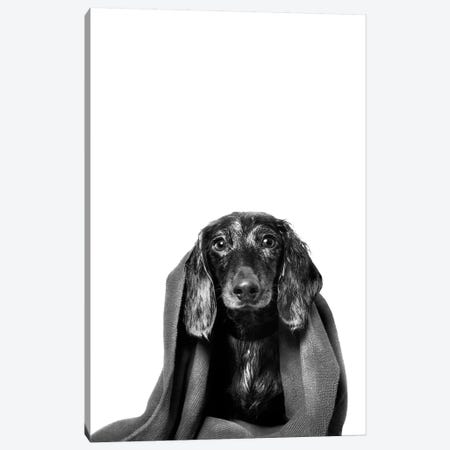 Wet Dog, Anthony With Towel, Black & White Canvas Print #SGM108} by Sophie Gamand Canvas Art