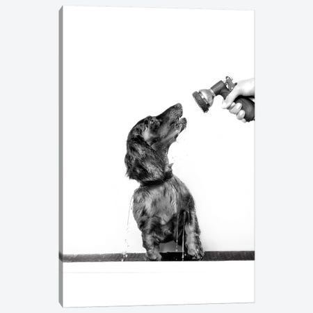 Wet Dog, Anthony, Black & White Canvas Print #SGM109} by Sophie Gamand Canvas Artwork