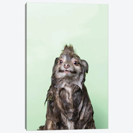 Wet Dog, Chelsea Canvas Print #SGM110} by Sophie Gamand Canvas Art Print