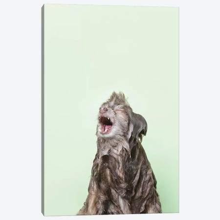 Wet Dog, Chelsea Canvas Print #SGM111} by Sophie Gamand Canvas Print