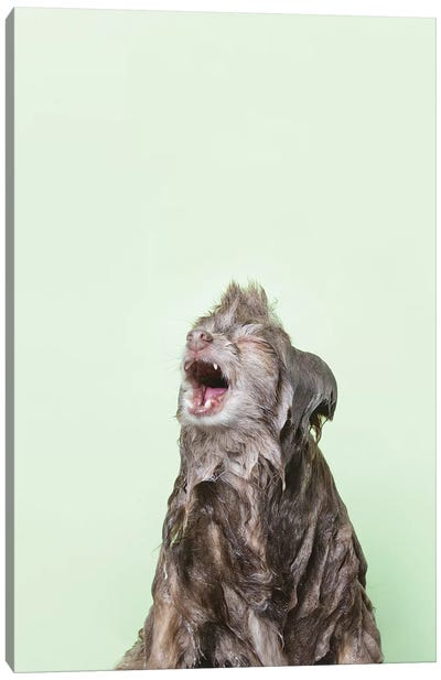 Wet Dog, Chelsea Canvas Art Print