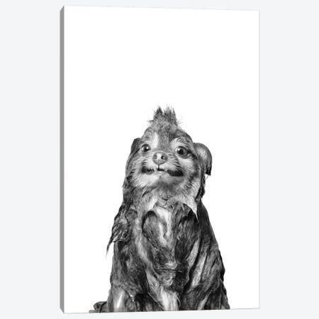Wet Dog, Chelsea II, Black & White Canvas Print #SGM112} by Sophie Gamand Canvas Print