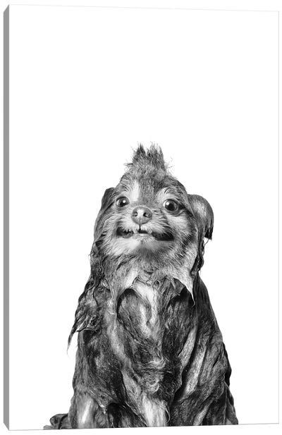 Wet Dog, Chelsea II, Black & White Canvas Art Print
