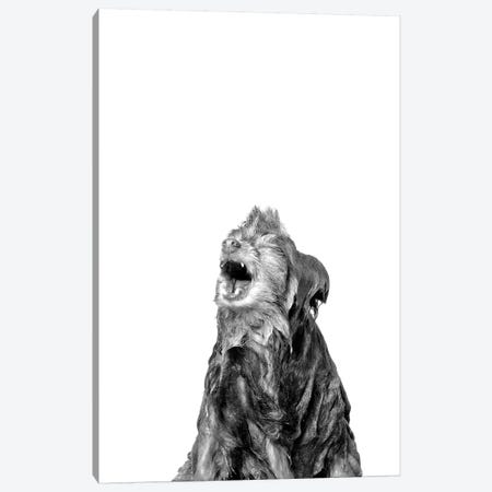 Wet Dog, Chelsea, Black & White Canvas Print #SGM113} by Sophie Gamand Art Print
