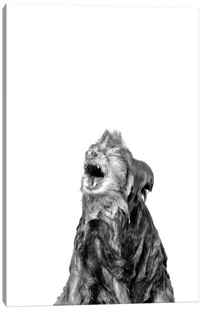 Wet Dog, Chelsea, Black & White Canvas Art Print