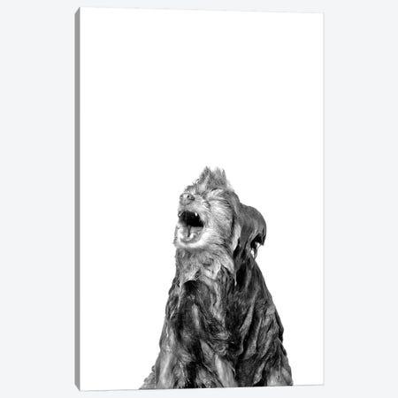 Wet Dog, Chelsea, Black & White Canvas Print #SGM113} by Sophie Gamand Art Print
