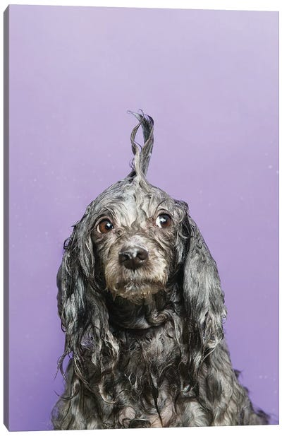 Wet Dog, Dana Canvas Art Print