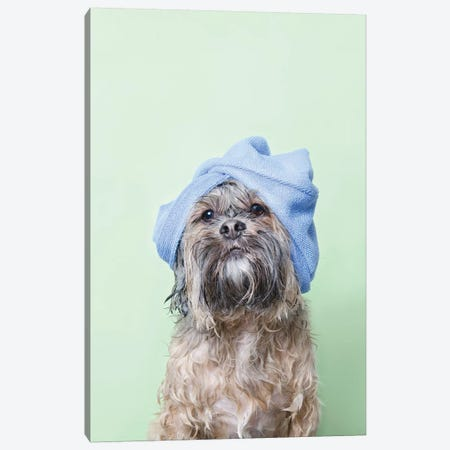 Wet Dog, Joey With Towel Canvas Print #SGM116} by Sophie Gamand Canvas Art