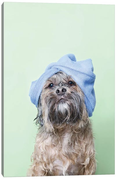 Wet Dog, Joey With Towel Canvas Art Print