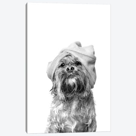 Wet Dog, Joey, Black & White Canvas Print #SGM117} by Sophie Gamand Canvas Wall Art