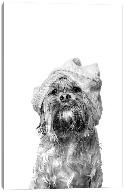Wet Dog, Joey, Black & White Canvas Art Print