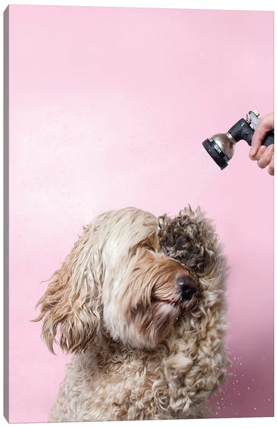 Wet Dog, Lelu Canvas Art Print